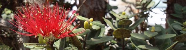 Ka La'i Waioli Hulaのイメージ