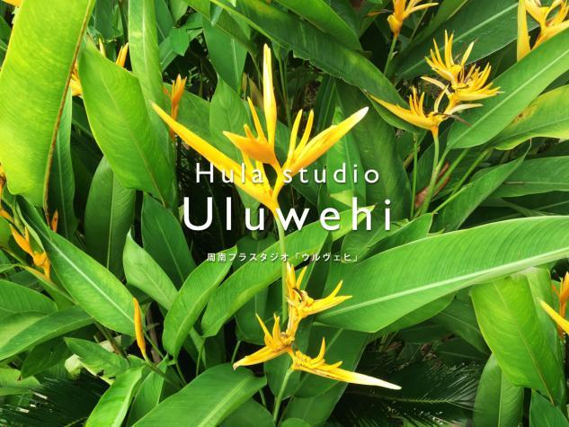 Hula studio Uluwehiのイメージ